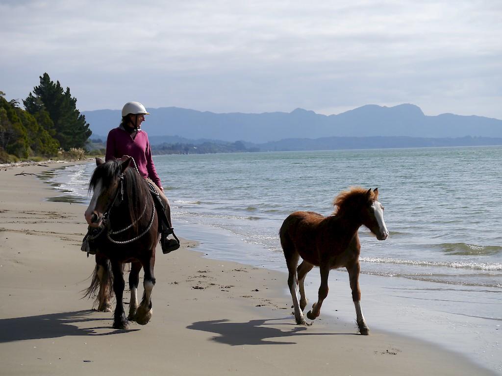 Golden Bay Horse Hack' n Stay Golden Ba...