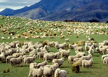 New Zealand Farmstay accommodation